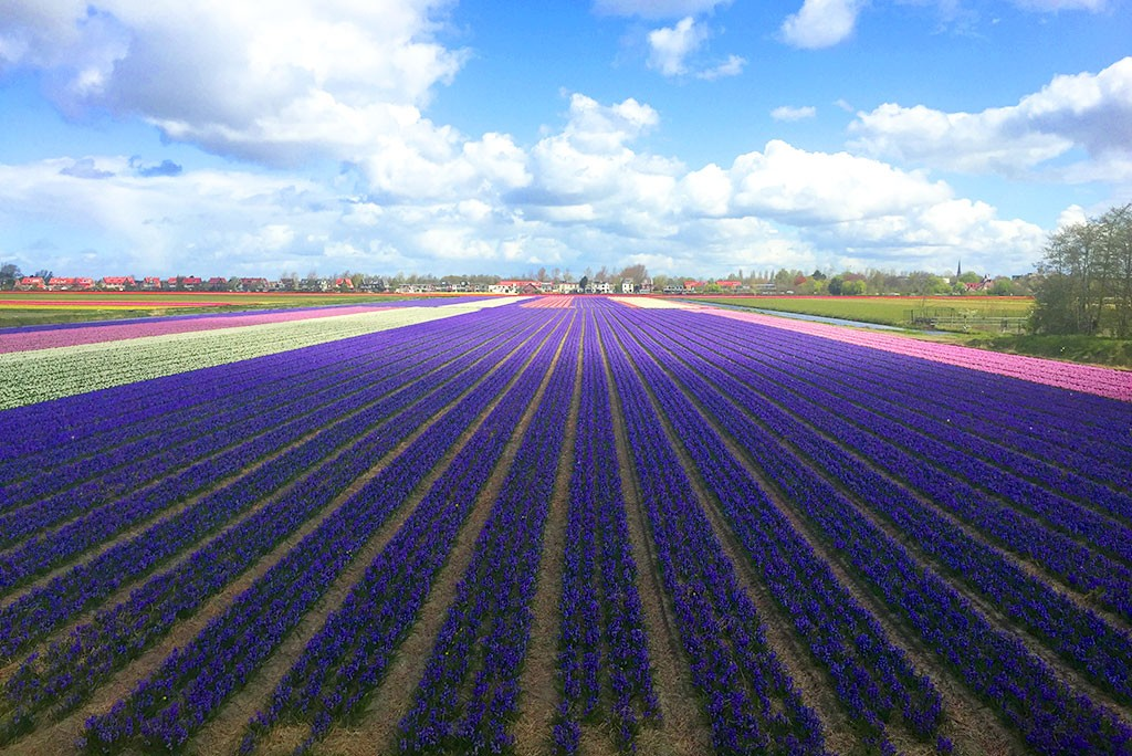 TULIPES-HOLLAND-2